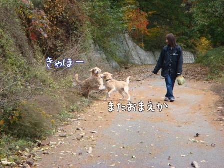 いつもの散歩道が大分紅葉してきました。_f0064906_17312282.jpg