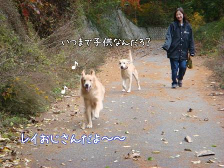 いつもの散歩道が大分紅葉してきました。_f0064906_17321195.jpg