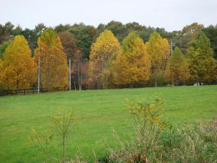 いつもの散歩道が大分紅葉してきました。_f0064906_17334644.jpg