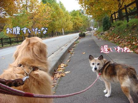 いつもの散歩道が大分紅葉してきました。_f0064906_17351793.jpg
