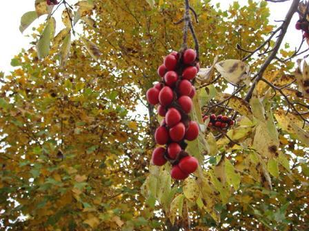 いつもの散歩道が大分紅葉してきました。_f0064906_173617100.jpg