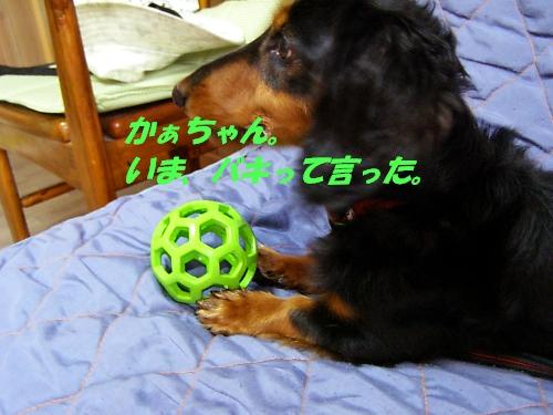 b0067012_2059377.jpg