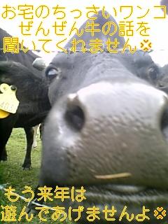 f0148927_17451774.jpg