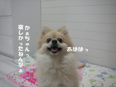 c0179136_16145022.jpg