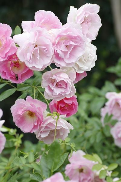 花園 2_c0155950_23524417.jpg