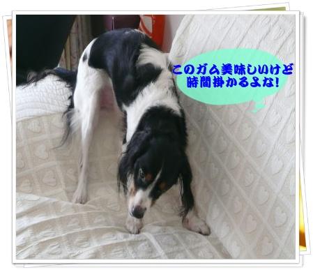 c0179053_22154974.jpg