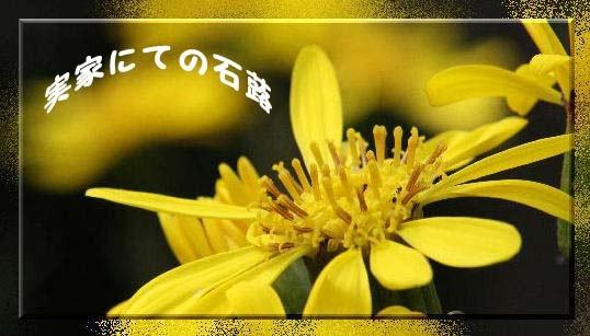 f0164592_9135.jpg