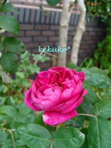 f0170524_11411691.jpg