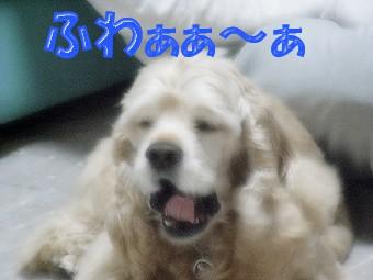 b0140342_2041377.jpg