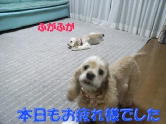 b0140342_22185775.jpg