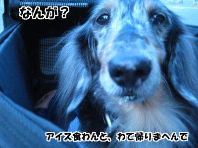 d0020869_1582016.jpg