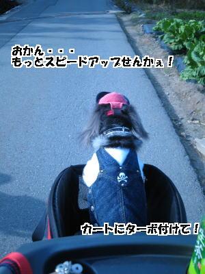 d0020869_552196.jpg