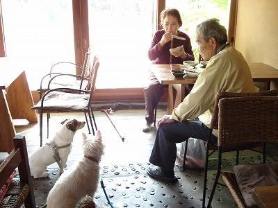 老人と犬_c0140982_15331017.jpg