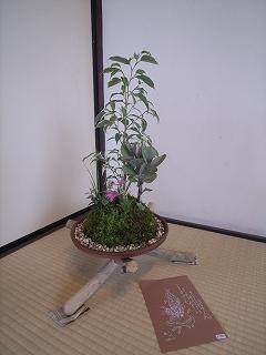 流木・苔玉(こけだま) : 松井民憲    (旧近衛邸の展覧会)_f0059988_11503625.jpg
