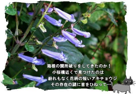 f0137096_11422510.jpg