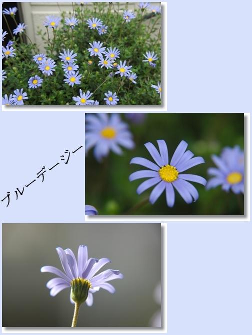 d0080118_21514023.jpg