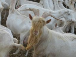 グルマンの旅〜山羊のチーズ屋さん_a0043319_1717790.jpg