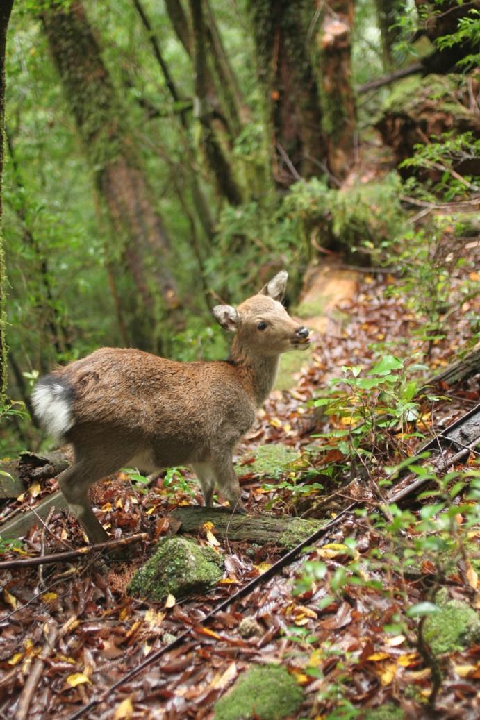 縄文杉に会ってきました・・・・_b0093830_125435.jpg
