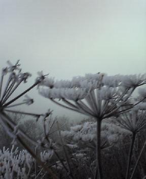 初霧氷です。_c0089831_636386.jpg