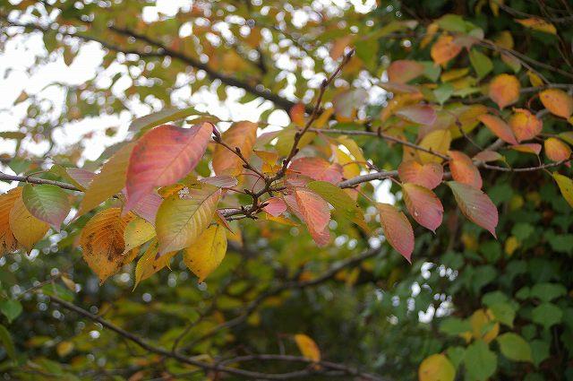 秋の「まるびー」界隈_d0043136_172544.jpg