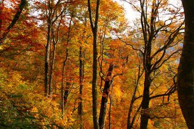 紅葉と樹氷の武尊山(ホタカヤマ) 2158m 群馬県_d0055236_0474923.jpg