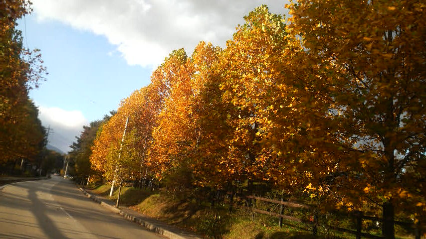 秋を探しに_f0028256_3474858.jpg