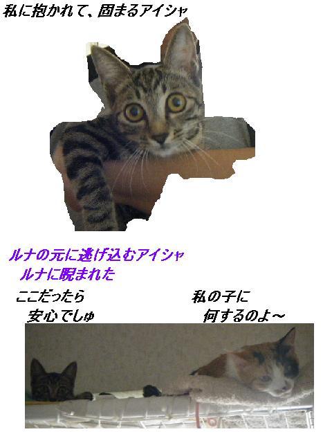 b0112380_182948100.jpg