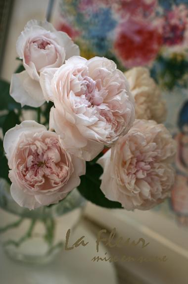 rose マーブルサクラダイ_f0127281_1781032.jpg