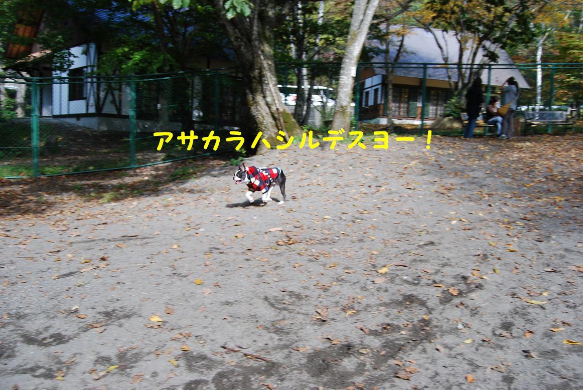 a0080889_15651.jpg