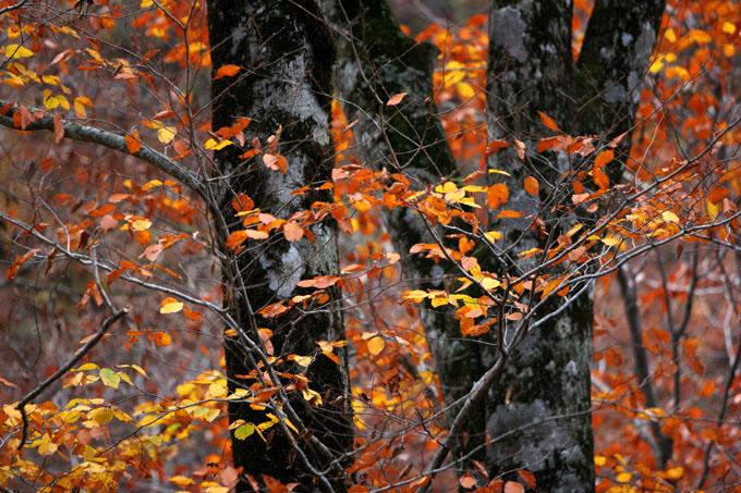 紅葉と落葉の「峨瓏ノ滝」_f0150893_20193068.jpg