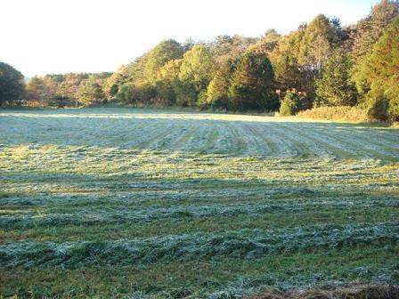 霜が降りた朝の散歩_f0064906_17335180.jpg