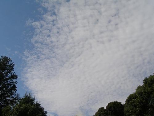 うろこ雲_d0147812_187497.jpg