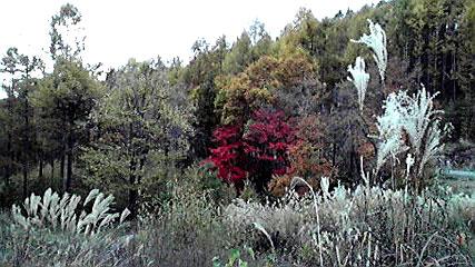 美しいチェルトの森の紅葉_d0109415_12584099.jpg