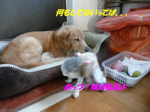 f0114128_11271974.jpg