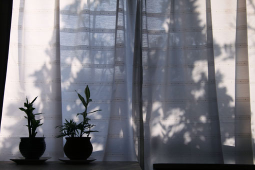 窓_c0107829_11202198.jpg