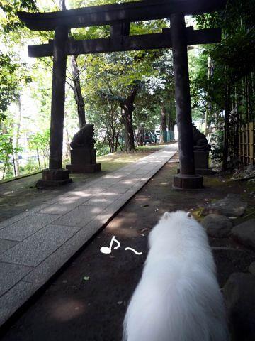 ぐるぐるお散歩_c0062832_18464318.jpg