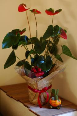 花だらけ~**_a0082146_0414642.jpg
