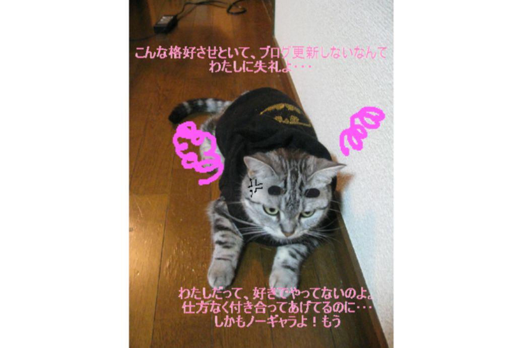 d0132661_12123632.jpg