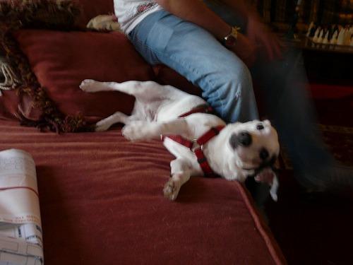 犬を売られました_b0093577_19155367.jpg