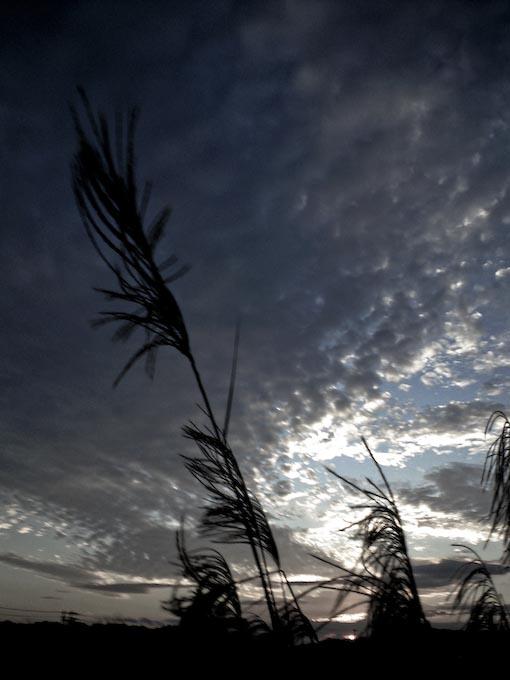 日没直前携帯カメラ4本勝負_c0150383_18433998.jpg