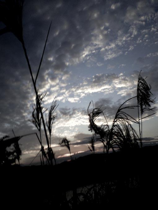 日没直前携帯カメラ4本勝負_c0150383_1843424.jpg