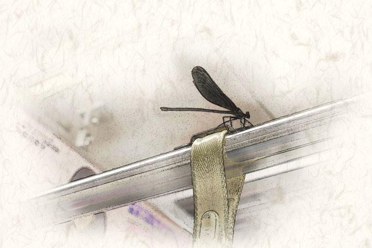 極楽蜻蛉_c0081286_762813.jpg