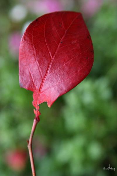 紅葉と虹!_c0048494_18364747.jpg
