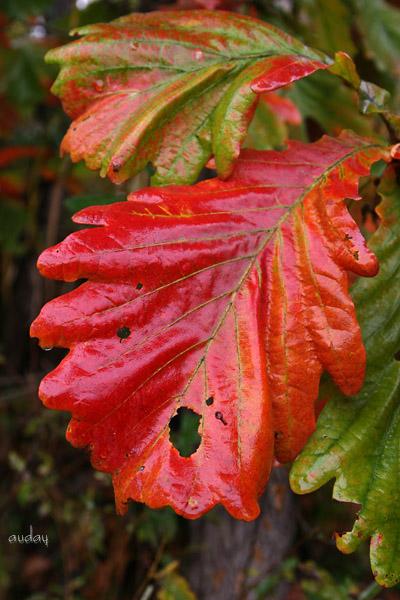 紅葉と虹!_c0048494_1837451.jpg