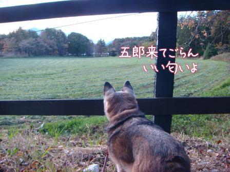 ああ~いい匂い_f0064906_1918895.jpg