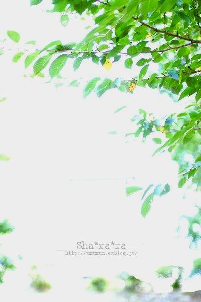 f0129510_14114995.jpg