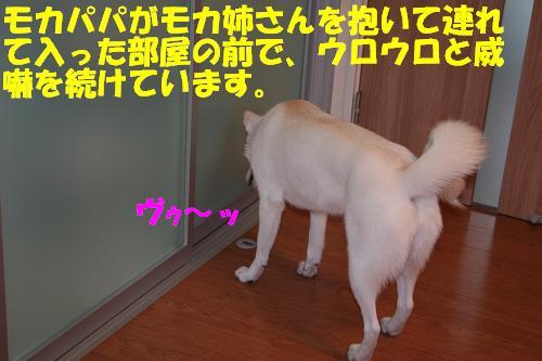 f0121712_12331649.jpg