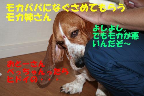 f0121712_12344275.jpg