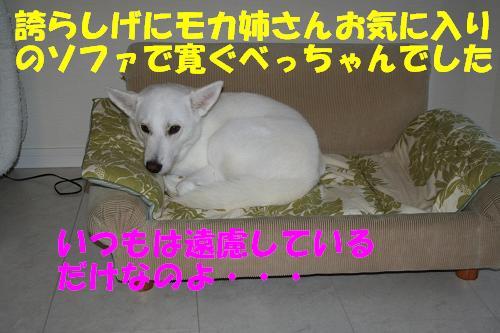 f0121712_1240484.jpg