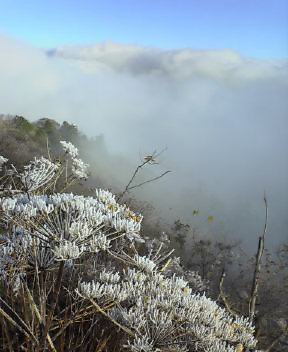 昨日の霧氷_c0089831_074511.jpg